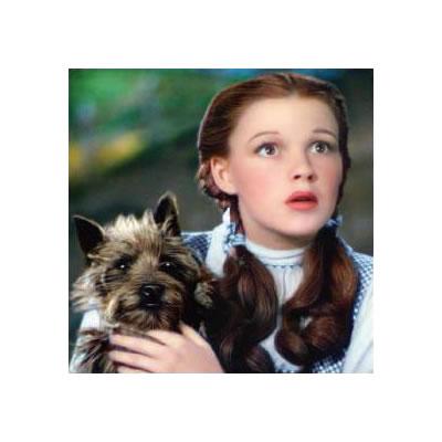 Dog Breed Wizard Of Oz