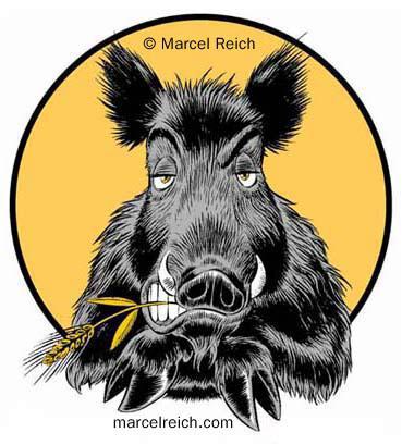 Do Not Feed Wild Boars Sticky Buns Misfitwisdom