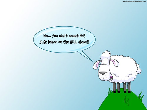 Sheep Funny Funny Counting Sheep Quotes