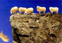 With no guard rails, sheep were the first to go over the fiscal cliff.