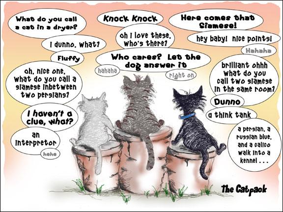 cat_jokes