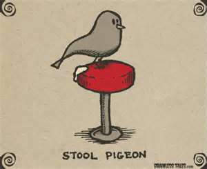 Rare photo of an actual stool pigeon.