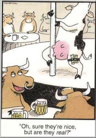cow_cartoon
