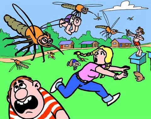 mosquito6