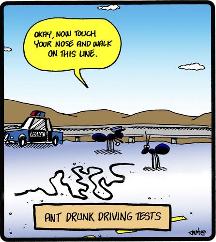 ants10