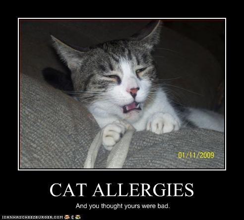 how to get rid of cat dander allergies