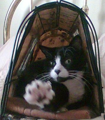 Sylvester,