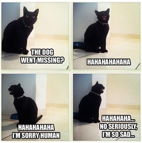 Your cat being sarcastic