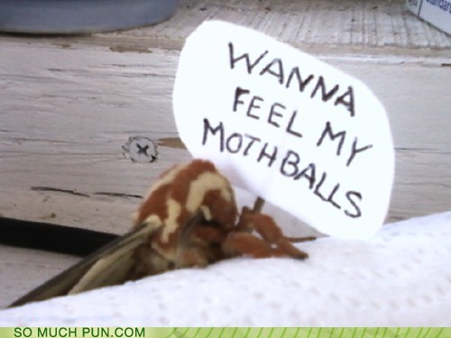 "Sorry....last ""moth ball"" joke....I promise. (fingers crossed)"