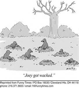 Mafia moles
