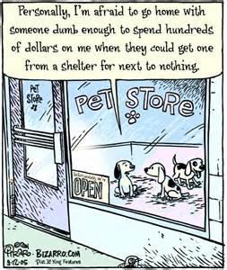 adopt animal