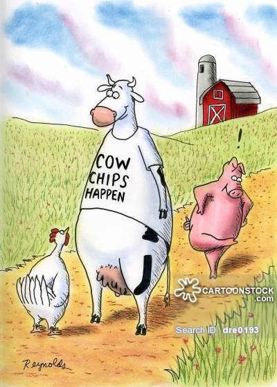 Cow Chips Happen,