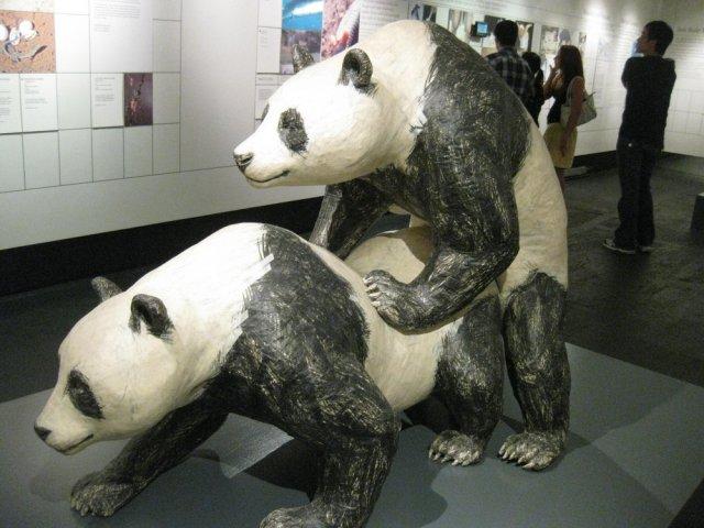 Awwww ....... lucu panda ....