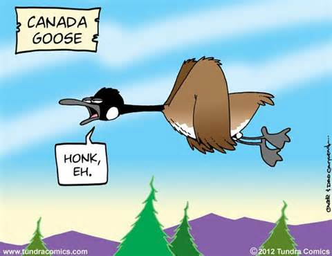 canada geese eh