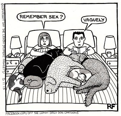 I can relate to this one....only with cats (sigh)
