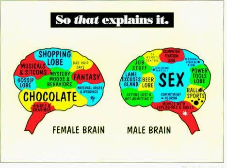 mens brain2