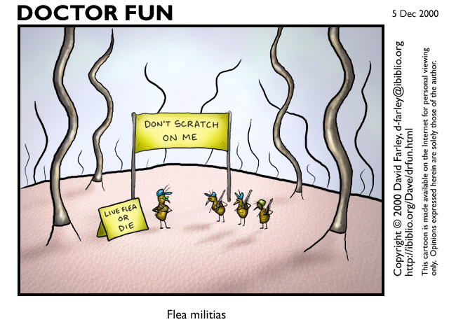 New Hampshire fleas
